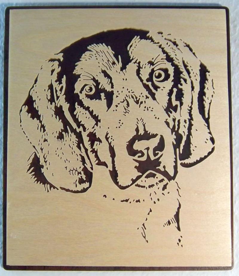 WB 009 Hundekopf Vorstehhund